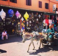 Marrakech Donkey