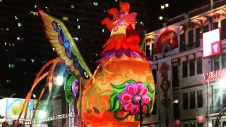 Singapore Rooster